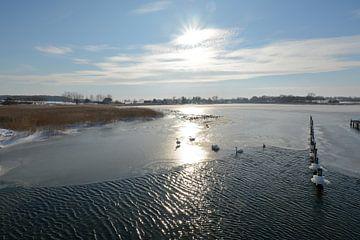 Zwanen in het bevroren meer Wreecher See, Putbus, Rügen van GH Foto & Artdesign