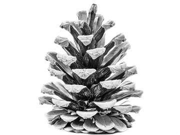 Pomme de pin noir et blanc
