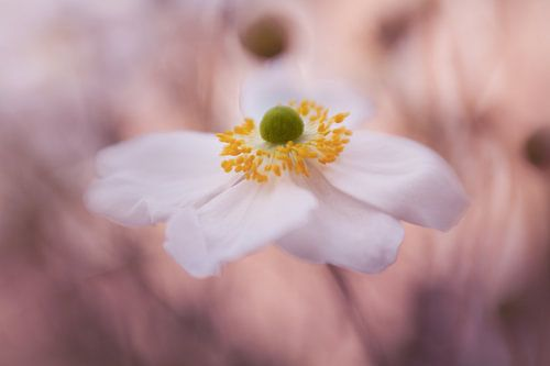 Anemone dreams... van LHJB Photography