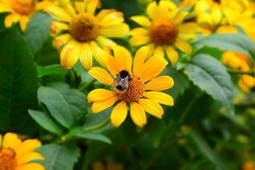 Gele bloemen met hommel van Ima Rhebok