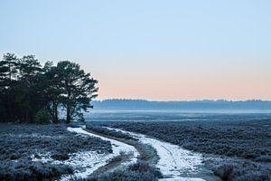 Ginkelse Heide im Winter von