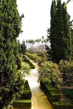 Ein Garten von einer Postkarte von Ennio Brehm