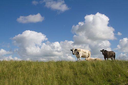 Koeien op de dijk