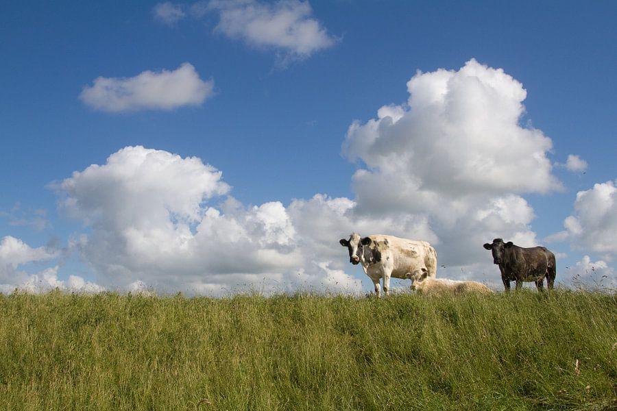 Koeien op de dijk van Dolf Siebert