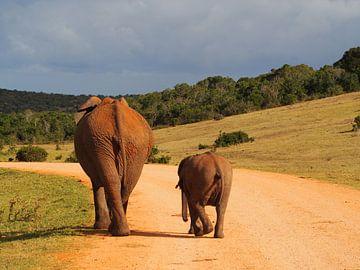 Überqueren von Elefanten von Marleen Berendse