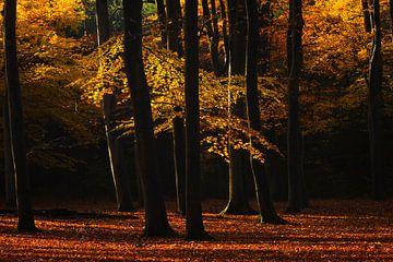 Leuvenumse bos herfst von Rick Kloekke