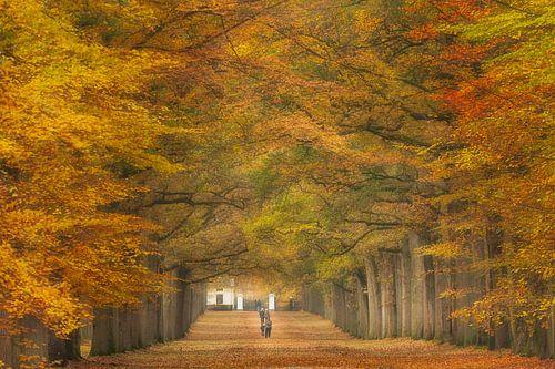 Autumn walk......