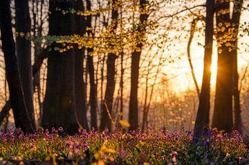 De zon ontwaakt in het bos