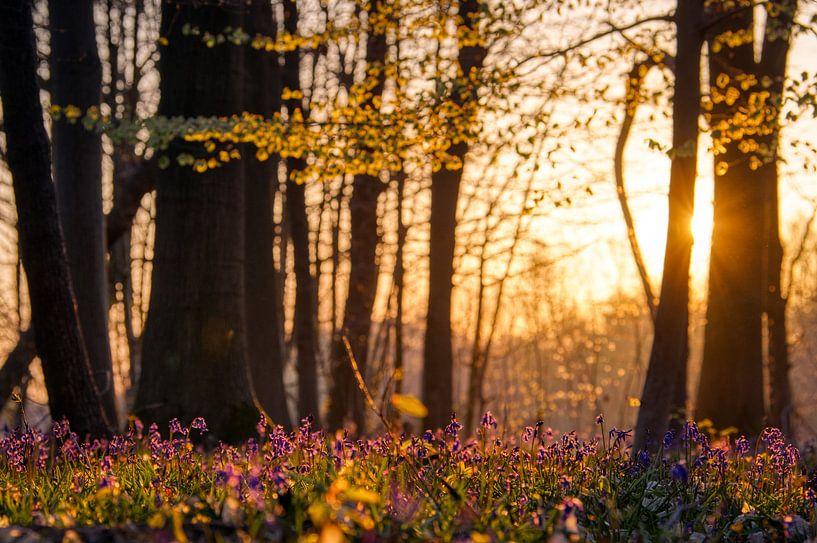 De zon ontwaakt in het bos van Jim De Sitter