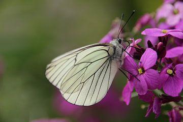 Vlinder von Marieke van Milligen