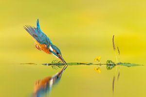 In aller Zen-Einfachheit ... von Wim Hufkens