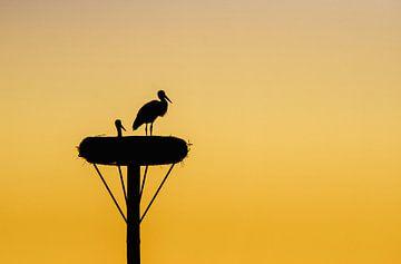 A pair of storks von Lex Schulte