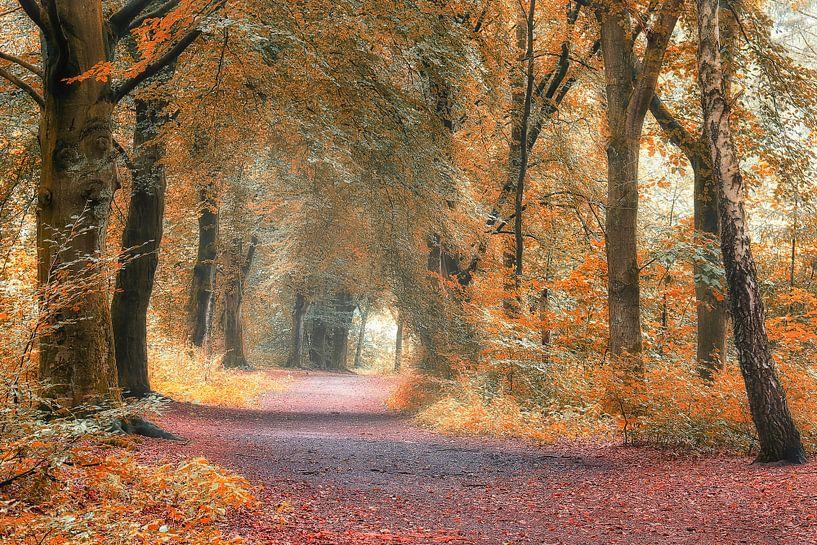 bos in de herfst van Rigo Meens