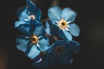 Blauwe bloemen van Isa V