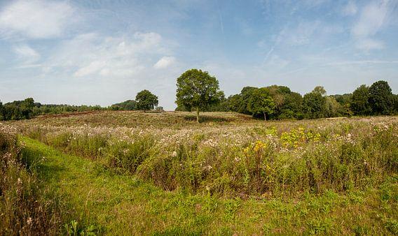 Heidelandschap bij Bocholtz in Zuid-Limburg