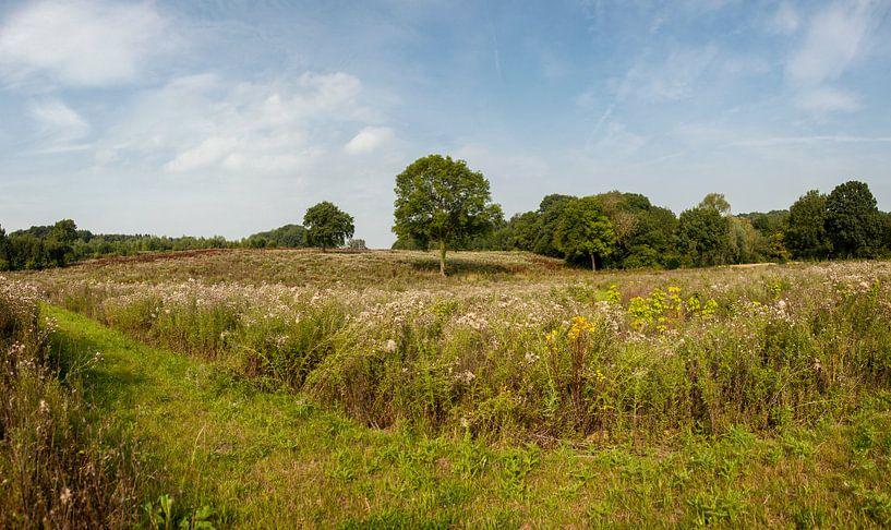 Heidelandschap bij Bocholtz in Zuid-Limburg van John Kreukniet