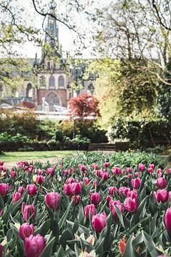 Der Wijngaardtuin im Haarlem ; öffentlicher Stadtgarten im Zentrum der Stadt Haarlem in den Niederla von Manon Galama
