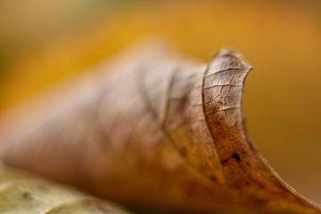 Autumn Leave van Charlene van Koesveld