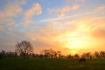 Pferd in der aufgehenden Sonne, Doezum, Groningen von Mark van der Werf