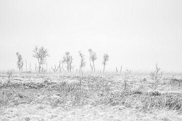 Sneeuwpret  op de Belgische Hoge Venen van Rik Verslype