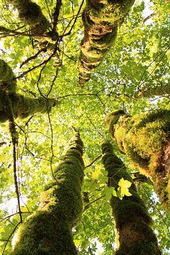 Baumgruppe von unten gesehen von Bobsphotography