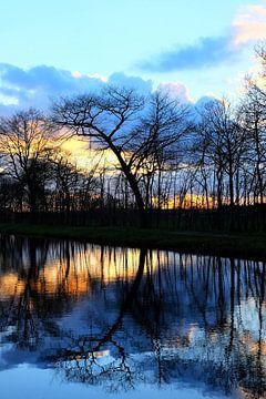 Bomen weerspiegelen in het water. van Marian Klerx
