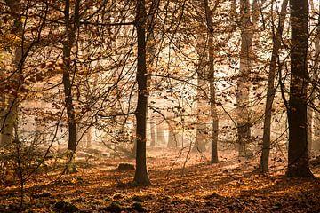 herfst in het bos van Contrast inBeeld