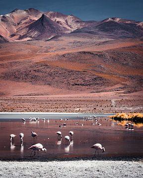 Flamingos in der bolivianischen Hochebene | Bolivien von Felix Van Leusden