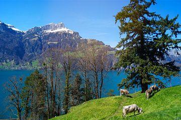 Koeien in Zwitsere wei van Malissa Verhoef
