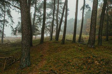Bomen in Gasteren van Rob Veldman