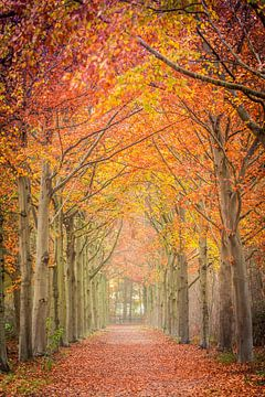 Kleurrijke boslaan in de herfst op landgoed Visdonk in Roosendaal (Brabant) van Fotografie Jeronimo