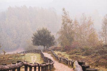 Quintelooijen im Nebel von Tania Perneel