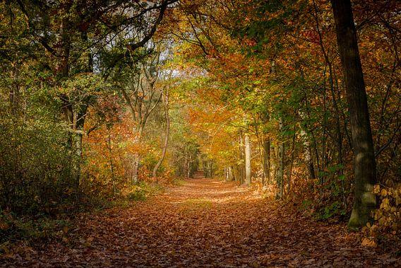 Herfst op zijn mooist van Jaco Verheul