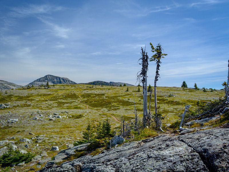 Surrealistisch landschap in het Wells Gray Provincial Park van Wilma van Zalinge