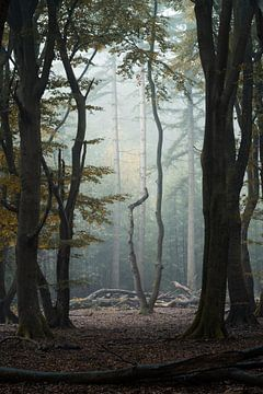 De eenzame boom....