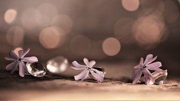 Blumen und Kristalle von Hansi Corstjens