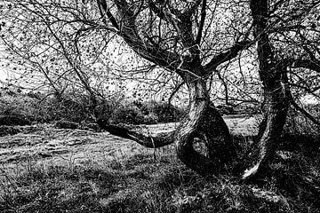 Grillige boomvorm met grove bast in zwart wit. van MICHEL WETTSTEIN