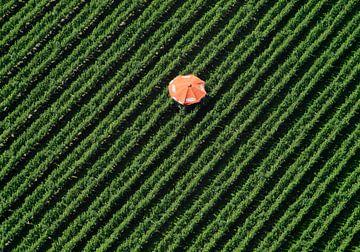 Boomgaard met rode parasol van Sky Pictures Fotografie