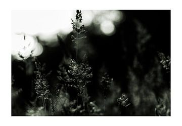 drieluik 'gras in tegenlicht', uitgevoerd in de '828 kleurtechniek' van Studio de Waay