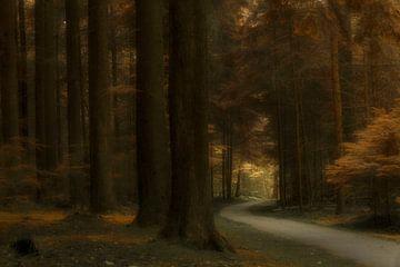 Into the light von D. Henriquez