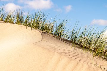 Dune de sable au sommet des dunes près de Castricum sur Rutger van der Klip