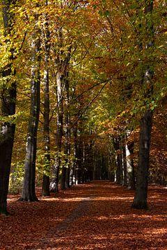 De herfst kleurt de beukenbomen met warme kleuren van Jani Moerlands