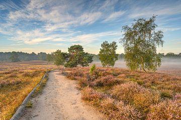 Morgensonne in der Heide von Michael Valjak