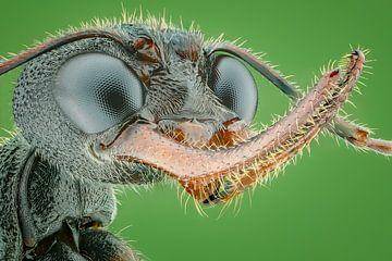 Ameisen regieren... von Arno van Zon