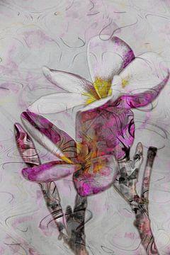 Plumeria Collage von MR OPPX