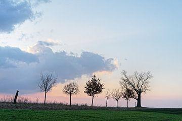 Baumreihe mit markanter Wolkenformation im Abendlicht von Ralf Lehmann