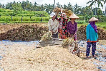 Reisfeldarbeiter im ländlichen Java von Nisangha Masselink