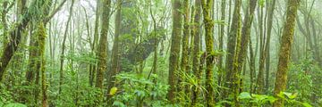 Tropisch Regenwoud van Chris Stenger