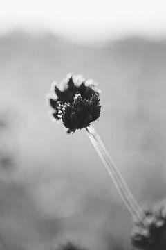 Getrocknete Pflanze in Schwarz und Weiß von FemmDesign