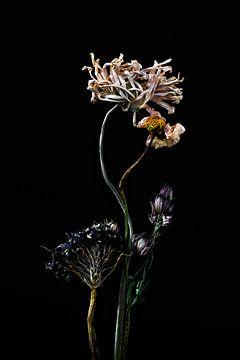 Mehrere getrocknete Blumen als Stillleben